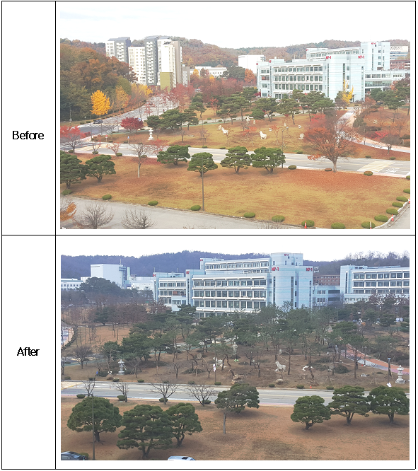 Complete to transplant the trees of Daejeon EXPO to KAIST. (December 2015) 이미지1