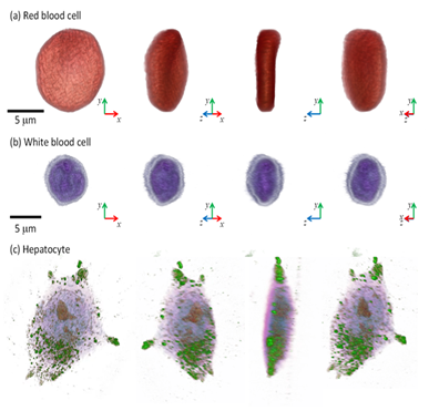 New microscope developed for 3D live cell imaging 이미지2