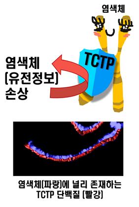 최광욱, 홍성태 교수, DNA 정보를 안정적으로 보존하는 과정 규명 이미지4