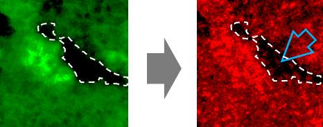 최광욱, 홍성태 교수, DNA 정보를 안정적으로 보존하는 과정 규명 이미지3