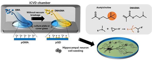 전상용, 임성갑 교수, 신경세포의 안정적 배양 가능한 플랫폼 개발 이미지4