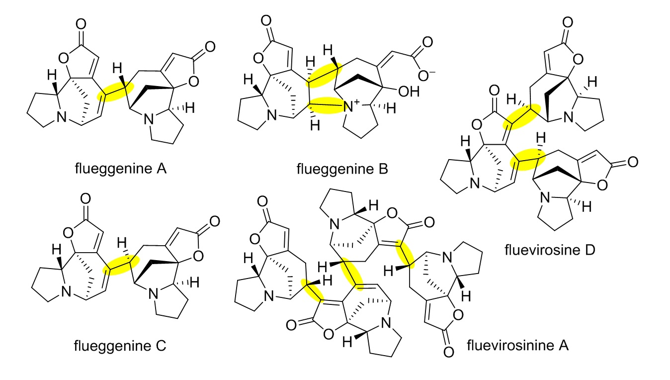Total Synthesis of Flueggenine C via an Accelerated Intermolecular Rauhut-Currier Reaction 이미지1