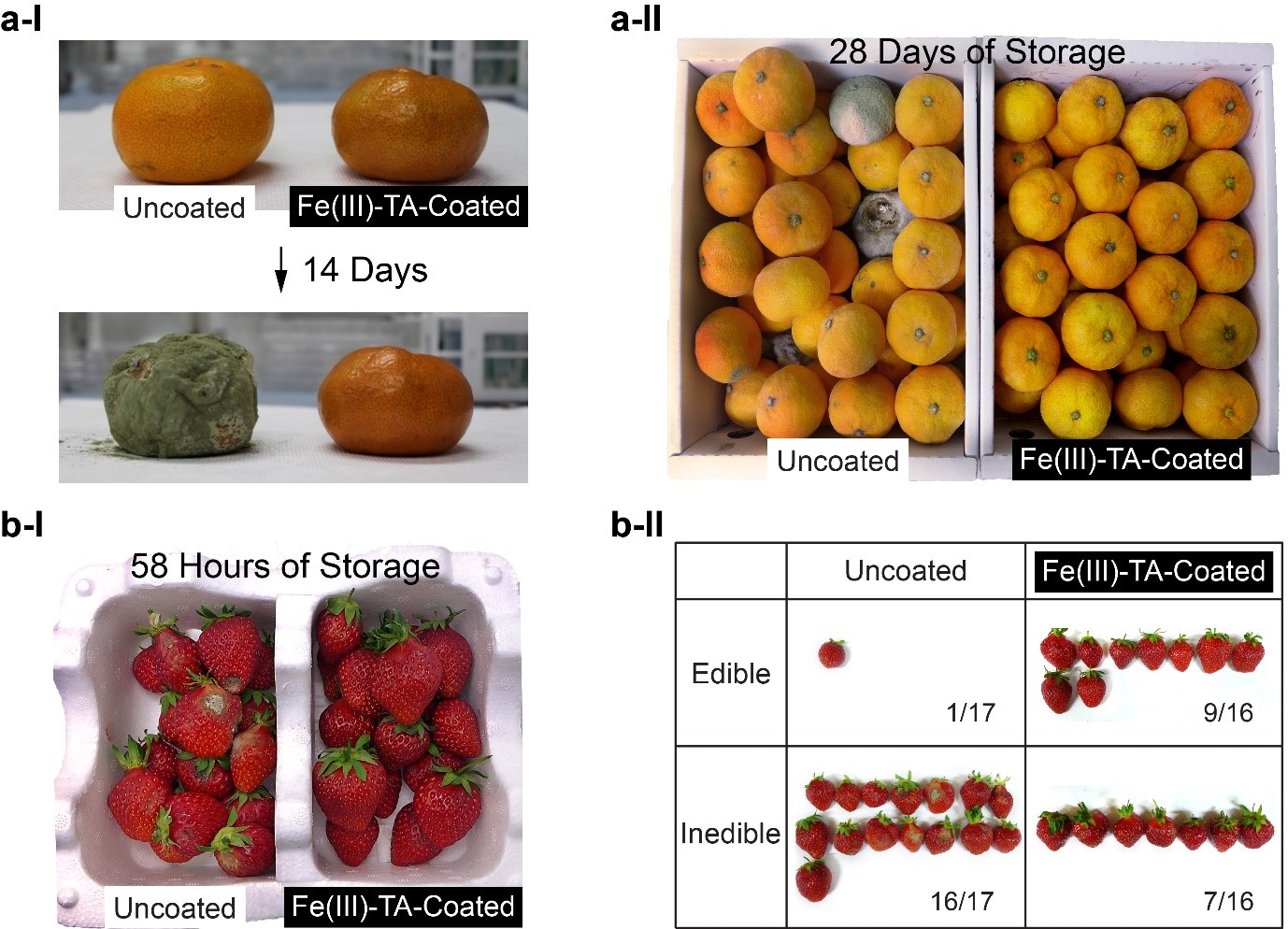 Material-Independent Nanocoating Antimicrobial Spray Significantly Extends the Shelf Life of Produce 이미지1