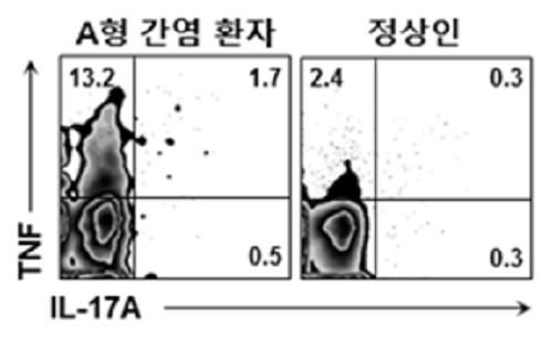 신의철, 정민경 교수, 바이러스 간염 악화시키는 세포의 원리 규명 이미지4