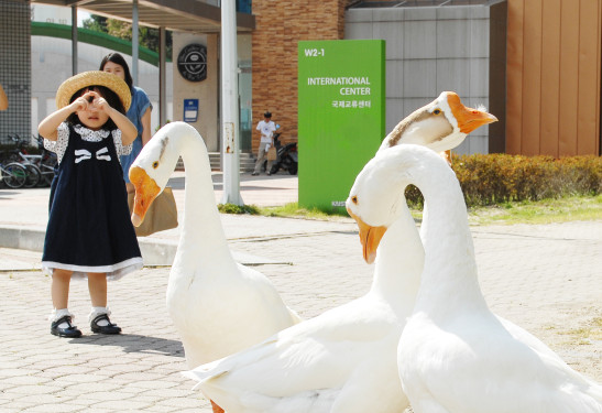KAIST, a Family-Friendly Organization 이미지1