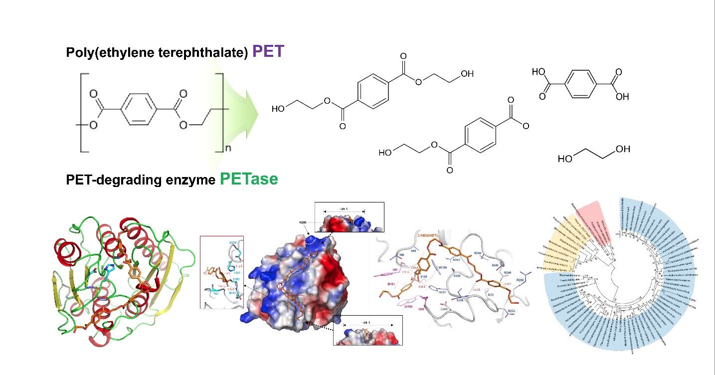 Structural Insight into the Molecular Mechanism of PET Degradation 이미지1