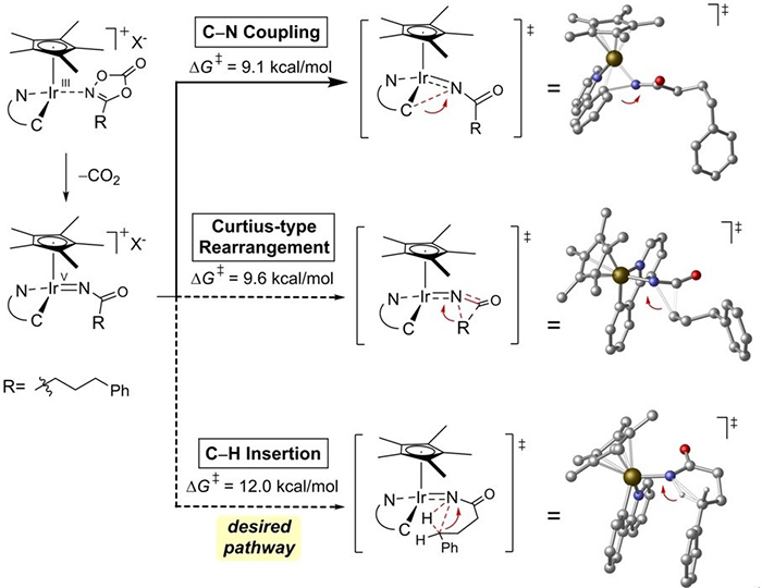 Successful Synthesis of Gamma-Lanctam Rings from Hydrocarbons 이미지3