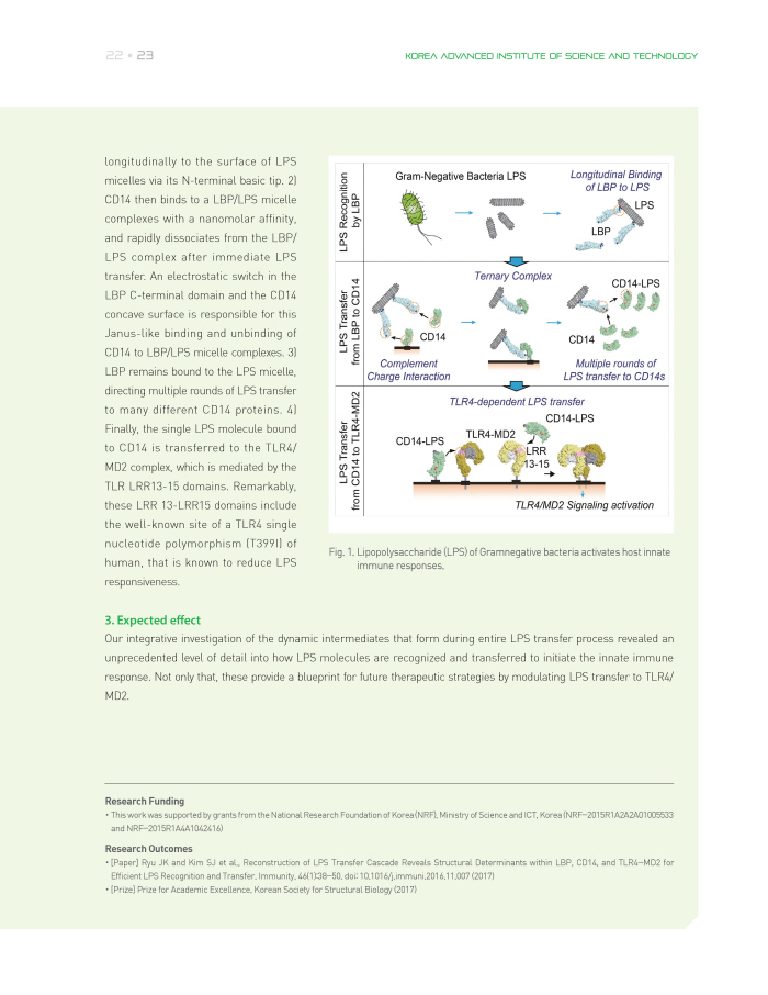 Dynamic LPS Transfer Mechanism for innate immune response 이미지2