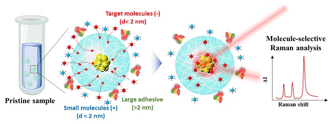 A Molecular Sensor for In-Situ Analysis of Complex Biological Fluids 이미지1