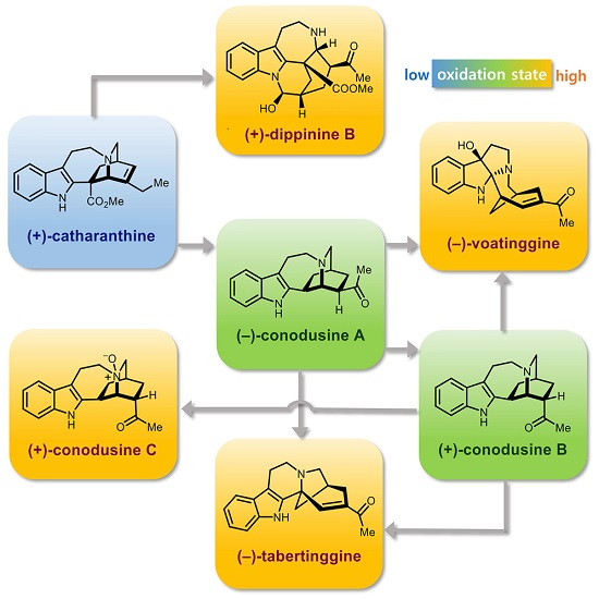 Novel Strategies to Transform a Commercially Available Iboga Alkaloid to Post-Iboga Alkaloids 이미지1