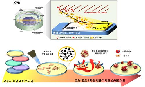 3차원 암줄기세포 스페로이드 형성 모식도