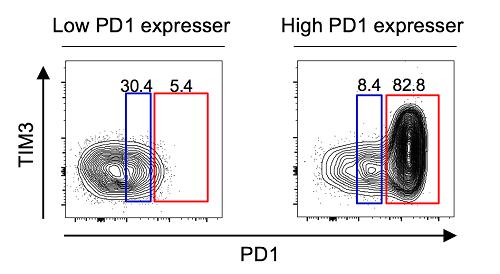 PD-1을 과발현하는 세포군의 존재 유무에 따른 특징적인 두가지 환자군