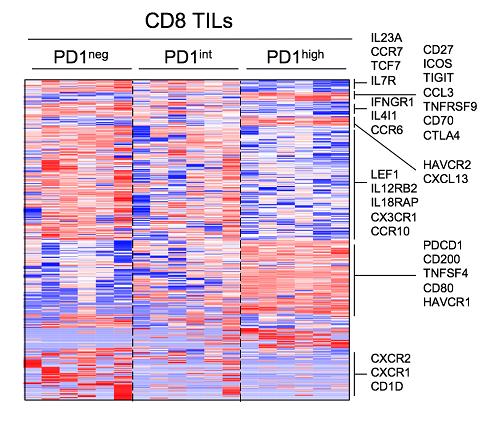 PD-1 발현에 따른 각 세포군의 특징적인 유전자 발현 양상