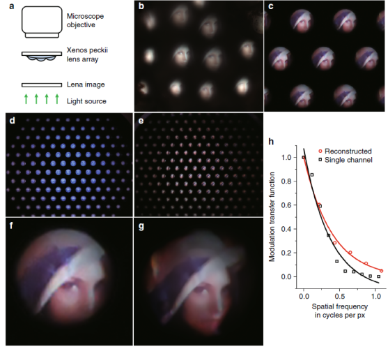 Figure 2. Optical images captured by the bioinspired ultrathin digital camera (Light: Science & Applications 2018)