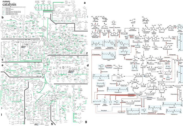 A Comprehensive Metabolic Map for Production of Bio-Based Chemicals 이미지2