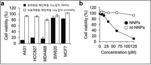 나노 구조체의 세포 내 단백질 전달 효과