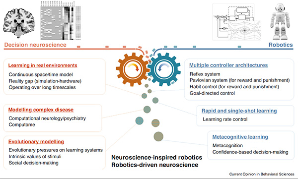 Overview of neuroscience - robotics approach for decision-making. The figure details key areas for interdisciplinary study (Current Opinion in Behavioral Sciences)