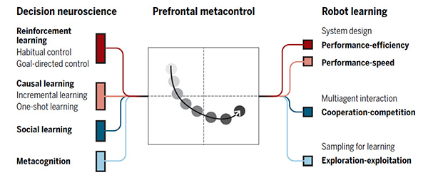 Neuroscientific views on various aspects of learning and cognition converge and create a new idea called prefrontal metacontrol, which can inspire researchers to design learning agents that can address various key challenges in robotics such as performance-efficiency-speed, cooperation-competition, and exploration-exploitation trade-offs (Science Robotics)