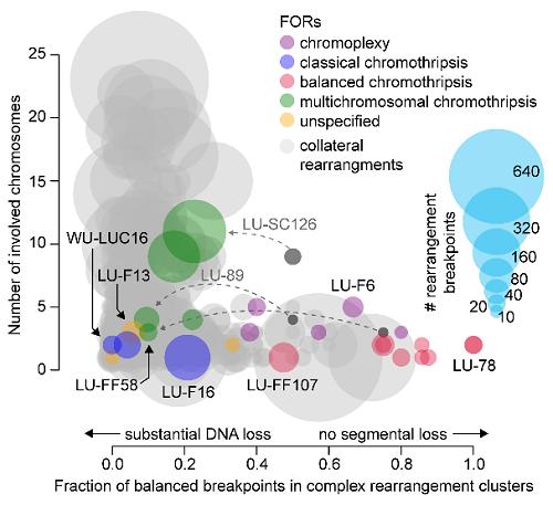 폐선암에서 관찰되는 다양한 복잡 구조 변이의 특성