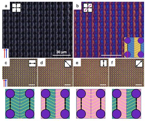 DNA-금 막대 입자 복합체의 배향 양상과 나타나는 플라즈모닉 광학 현상
