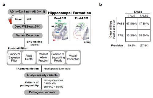 본 연구에서 사용된 체성 유전변이 분석 파이프라인