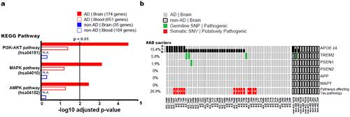 신경섬유성다발 형성에 관여하는 체성 유전변이
