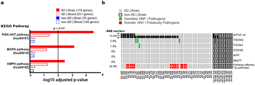 Deciphering Brain Somatic Mutations Associated with Alzheimer's Disease 이미지2
