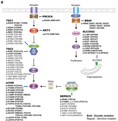 연구에서 발견한 체세포성 돌연변이