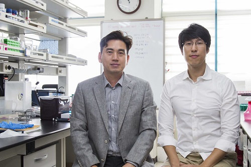 Researchers Describe a Mechanism Inducing Self-Killing of Cancer Cells 이미지1