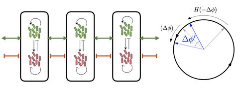 박테리아들의 복잡한 상호작용을 수학을 이용해 원위의 점들의 상호작용으로 단순화한 모식도