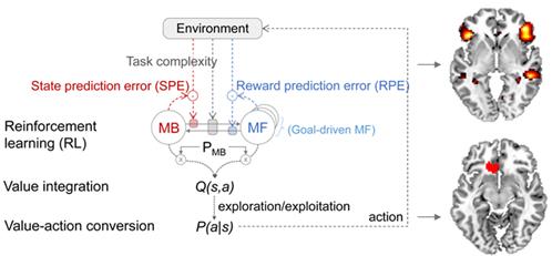 메타 강화학습 모델과 각 단계의 정보처리 과정에 관여하는 뇌 영역