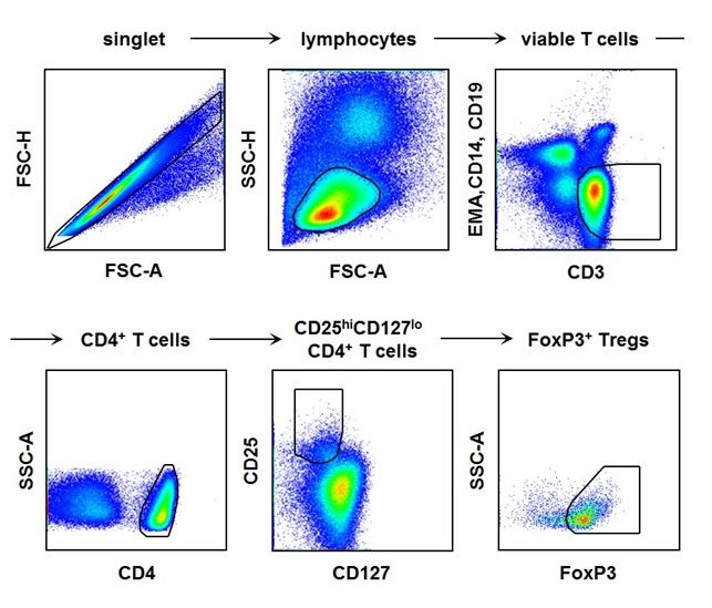 Regulatory T cells in Hepatitis A.jpg